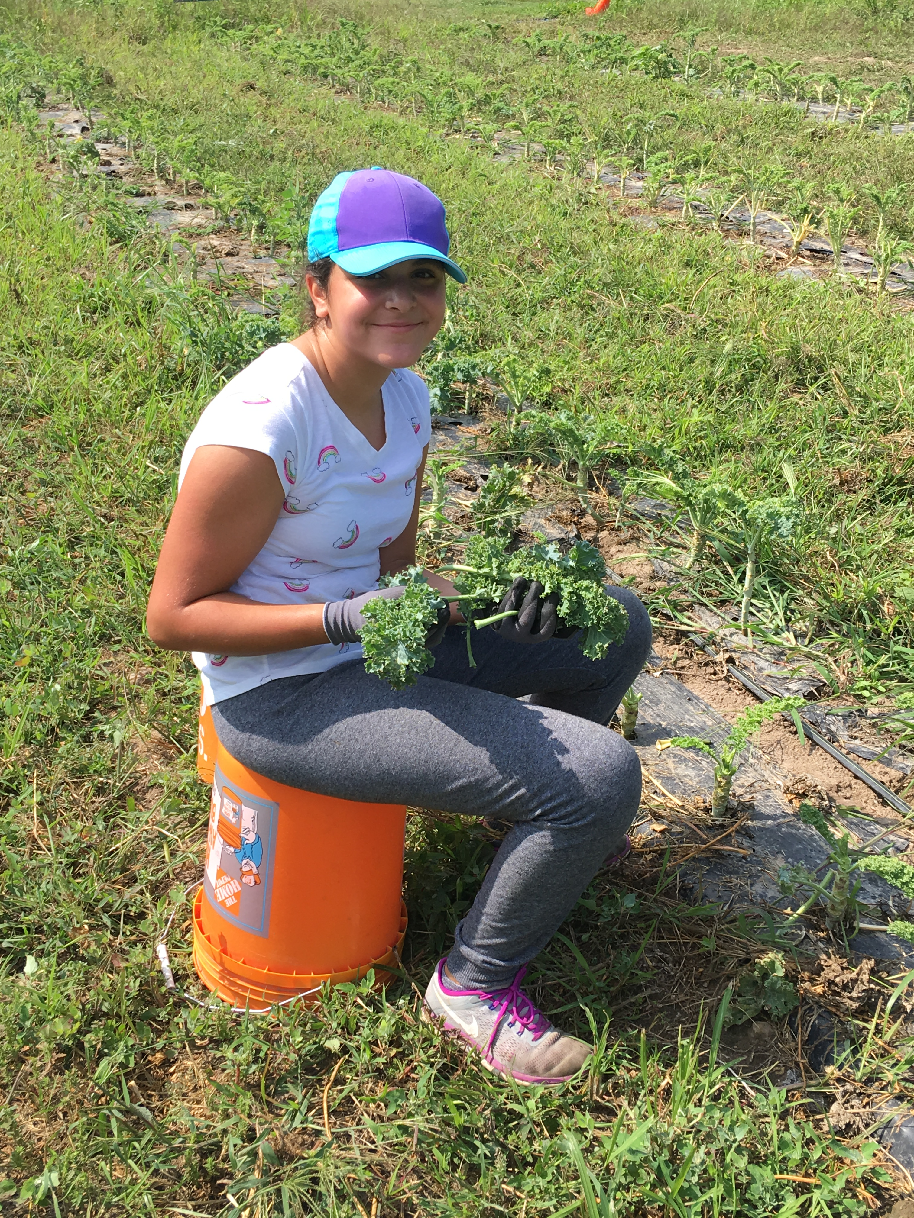Genisys Credit Union's Sponsored Acre of Kale on its Third